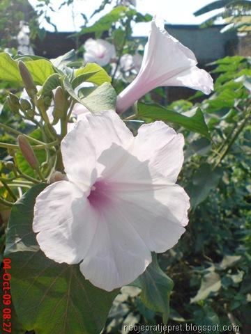 Praktikum bunga majemuk islamiardela anonim p ccuart Image collections
