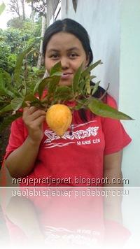 buah sawo garut 01