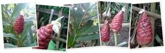 View Bunga Lempuyang