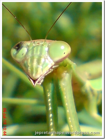 one eye praying mantis 27