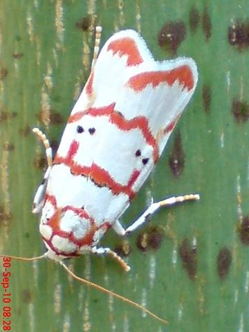 Foto Kamar Mandi Kecil on Ngengat Putih Bergaris Merah   Jeprat Jepret Hape